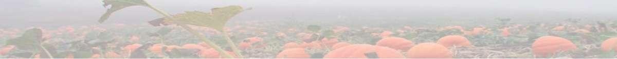 pumpkins-in-fog-thin2