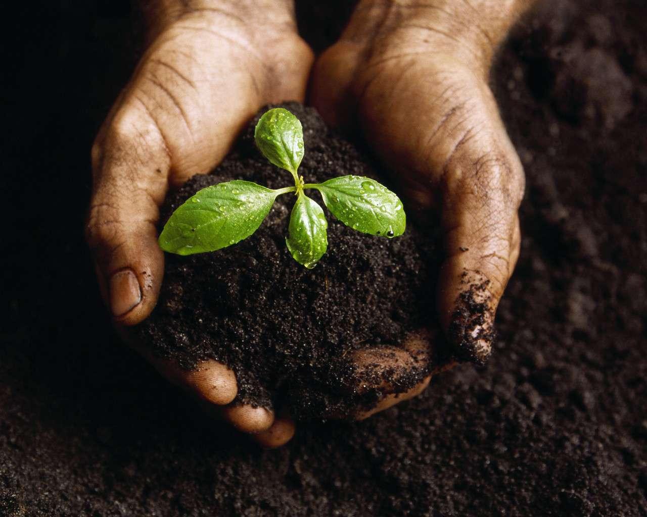 Square Foot Gardening Soil Greendell Landscape Solutions